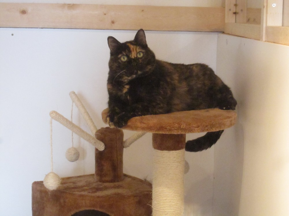 Escape To the Country Cattery
